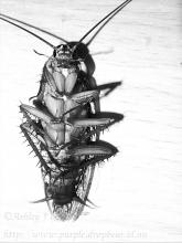 """Euch! Dying Cockroach - processed and posted exclusively for the PhotoFriday """"Gross"""" challenge. To think I could have taken a photo of 12 bunches of a dozen roses, or someone's paycheck before the Goverment took their slice, or some political satire of Gross Incompetence... it ain't always pretty."""